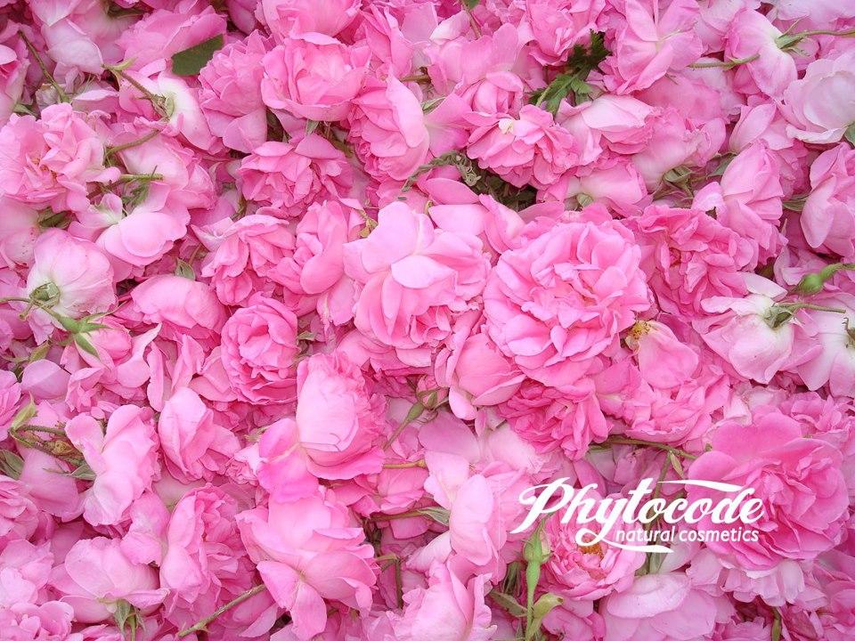 Phytocode – Tonico Detergente Idratante 35 +