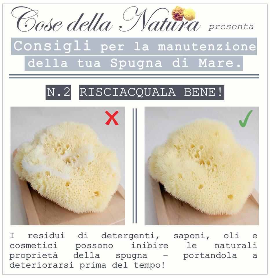 Cose Della Natura Spugna Fine Dama Un Tocco Vellutato Sulla Nostra Pelle Vanityspace